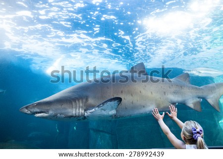 Young woman touching a shark tank at the aquarium - stock photo