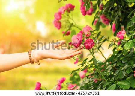 Young woman touching rose close-up