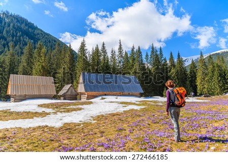 Young woman tourist standing on pasture with blooming crocus flowers in Chocholowska valley, Tatra Mountains, Poland