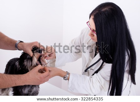 Young woman veterinarian looking at dogs teeth on the table - stock photo