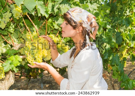 Young woman, vine grower, inspecting the fresh grape crop in the vineyard. - stock photo