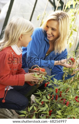 Young woman with child harvesting tomatoes - stock photo