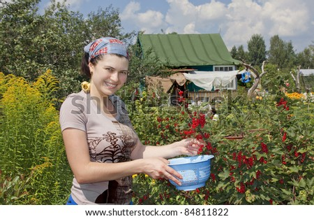 Young woman with crop of red currant in garden .
