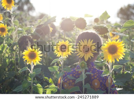 Young woman with sunflower in her hands is on the field in the rays of the rising sun Back view. - stock photo