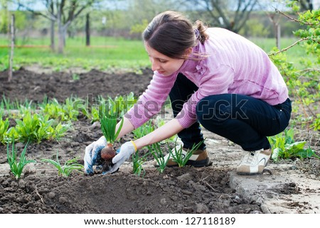 Young woman working in the garden. Horticulture. - stock photo