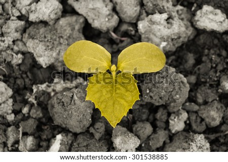 Young yellow sprout is on the ground. - stock photo