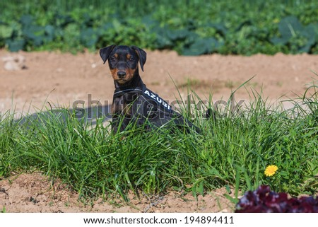 youngster - stock photo