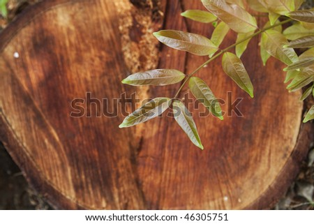 youth branch with chop background - stock photo