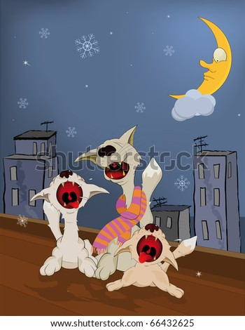 Yowling cats on a roof and a New Year's eve - stock photo