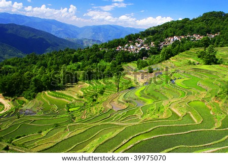 Yuan-yang Rice Terraces, Yunnan