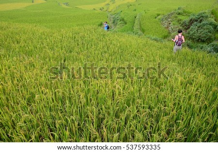 Yuanyang, China-August 13, 2013: A tourist walking along the rice paddies in Yuanyang