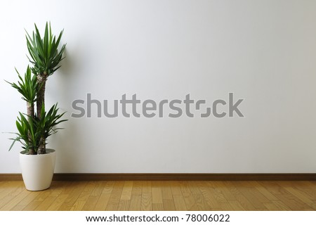 Yucca in white room - stock photo