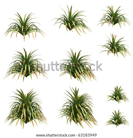 Yucca isolated on white - stock photo