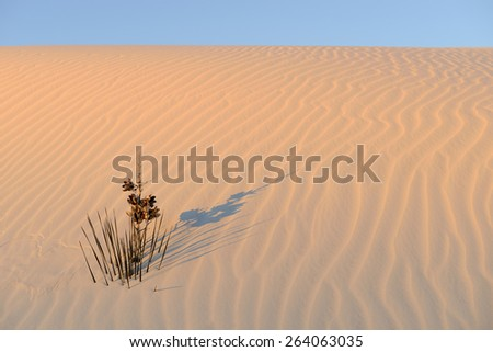 Yucca Plant in Rippled Sand in Morning Sunlight - stock photo