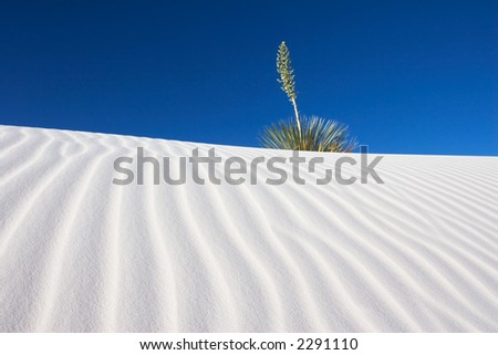 Yucca plant on a sand dune - White Sands National Monument, New Mexico, USA. - stock photo