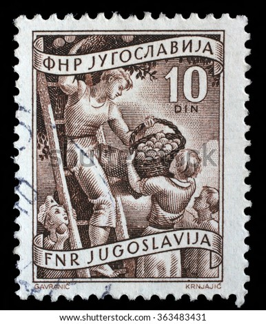 YUGOSLAVIA - CIRCA 1952: A stamp printed in Yugoslavia shows fruit rowing, domestic economy series, stamp for surcharges, circa 1952