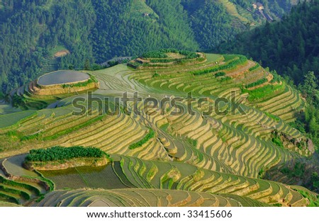 Yunnan  rice terraces in the evening light