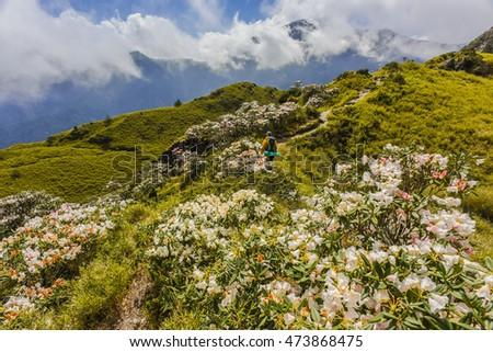 Yushan Rhododendron (Alpine Rose) Blooming by the Trails of Taroko National Park, Taiwan