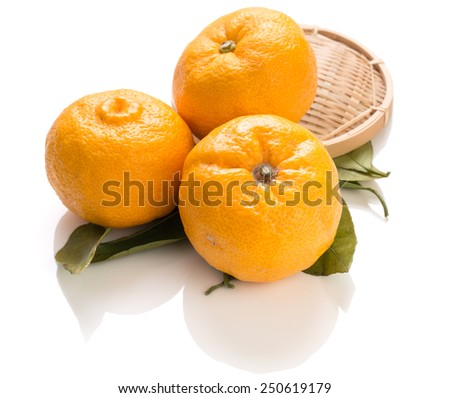 Yuzu fruits famous for aromatic zest (Hybrid between Citrus ichangensis and Citrus reticulata)  - stock photo
