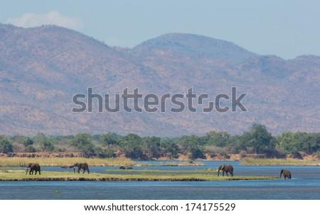 Zambezi river with African Elephants and Buffalo - stock photo