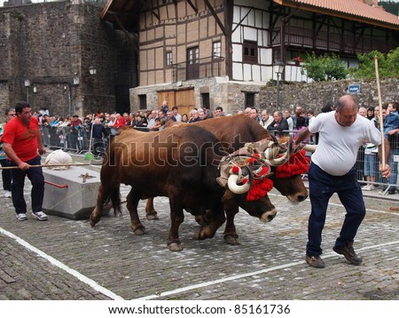 ZEANURI, SPAIN - MAY 15: Idi probak (oxen tests) is a basque rural sport, these sports are also known as Herri Kirolak in Basque, on May 15, 2011 in Zeanuri, Spain - stock photo