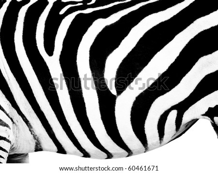 Zebra belly wallpaper on pure white background