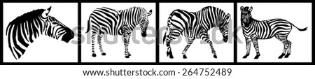 Zebra collection on white background - stock photo