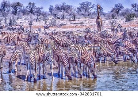 Zebra herd drinking at Etosha National Park waterhole,digital oil painting - stock photo