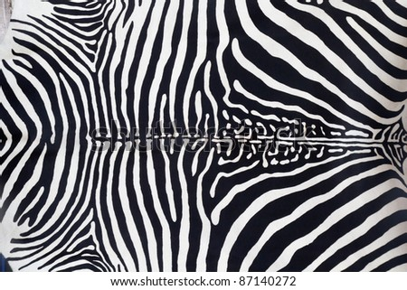 Zebra leather skin texture painted from a cow - stock photo