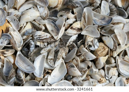 Zebra muscles - stock photo