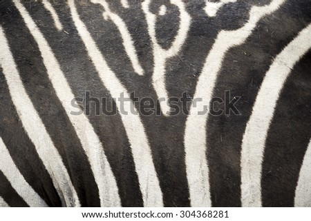 Zebra Pattern - Color - Background