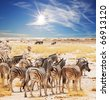 zebras on waterhole - stock photo