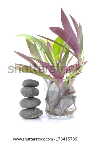 Zen And Spa Stones And Small Plant In Glass Vase Over White Background - stock photo