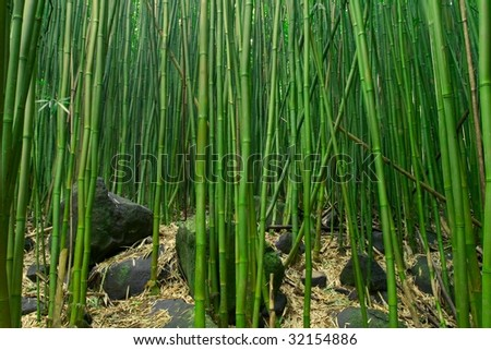 Zen Bamboo and Rocks - stock photo