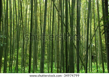 Zen bamboo forest - stock photo