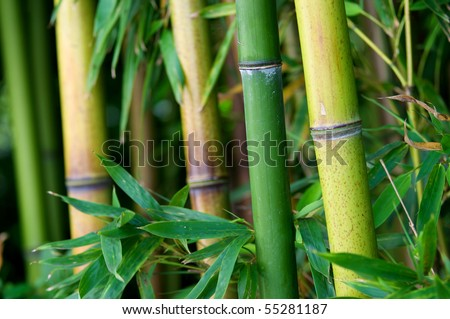 Zen bamboo forest green background