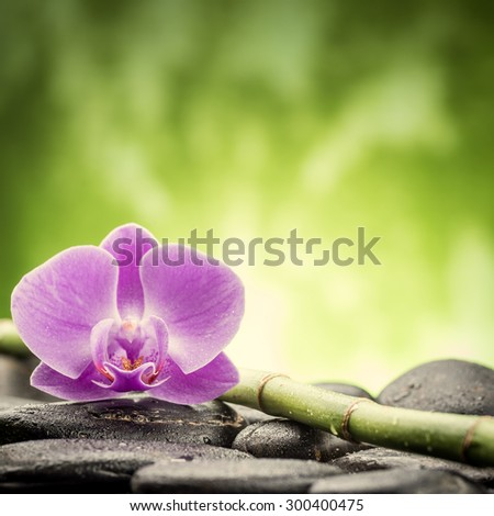 zen basalt stones ,orchid and bamboo - stock photo