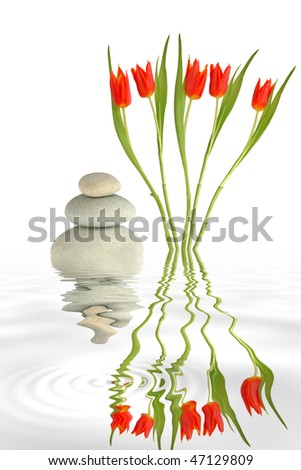Zen garden abstract of red tulip flowers and grey spa stones in perfect balance with reflection in rippled grey water, over white background. - stock photo