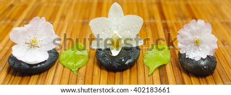 ZEN garden with stones in row with blossom - stock photo