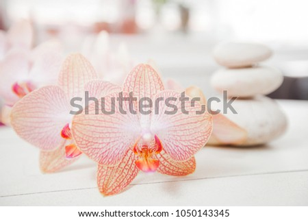 Zen Meditation Spa Lifestyle, flower orchid and balanced stones on white wooden background