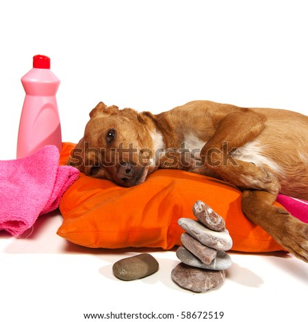 Zen moment and Spa treatment for dog - stock photo