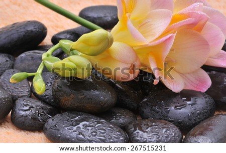 Zen or Spa Stones with flower - stock photo