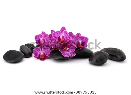 Zen pebbles and orchid flower. Stone spa and healthcare concept. - stock photo