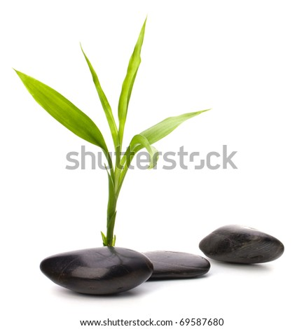 Zen pebbles path. Spa and health care concept.