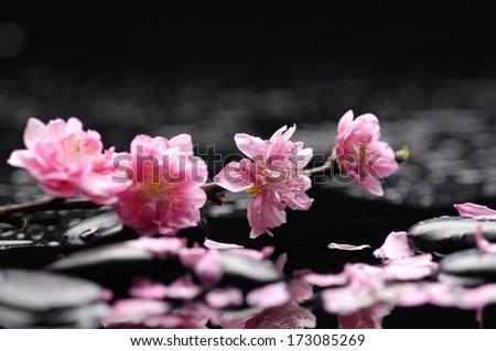 Zen pebbles. spring flower - stock photo
