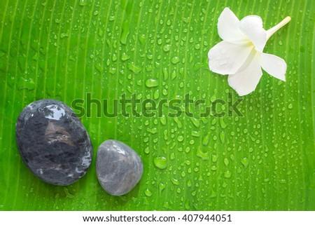 Zen spa bacground, frangipani or plumeria flower, banana leaf, rock - stock photo