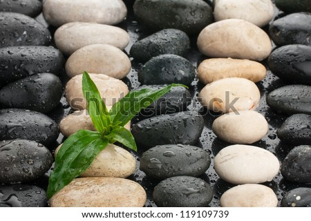 zen stones and leaf with water drops