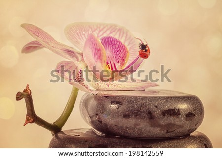 Zen stones and orchid with retro filter effect  - stock photo