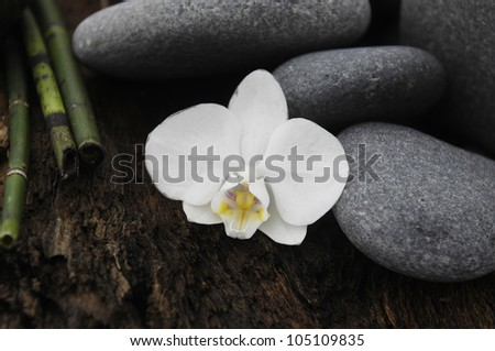 zen Stones with bamboo grove and orchid on Driftwood