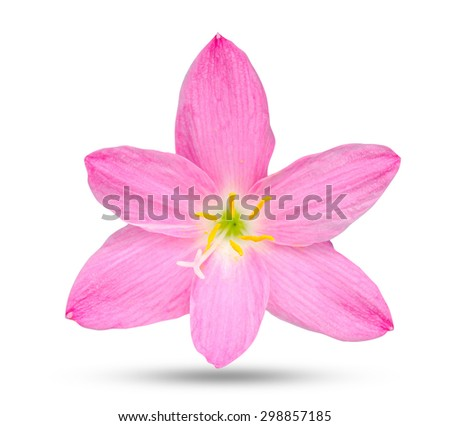 Zephyranthes Rosea on white with clipping path